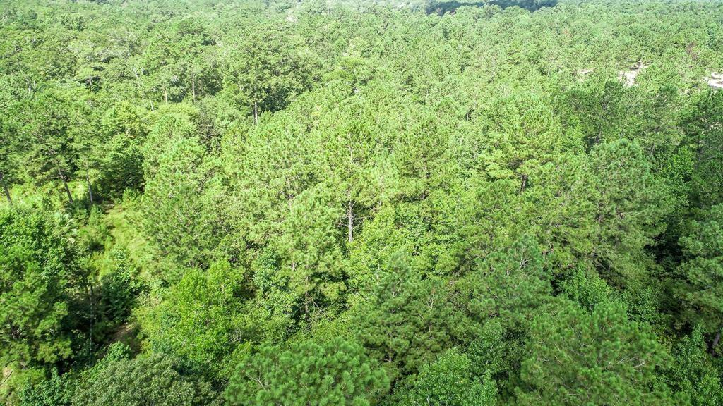 0 SECURITY FOREST DRIVE Property Photo - Conroe, TX real estate listing