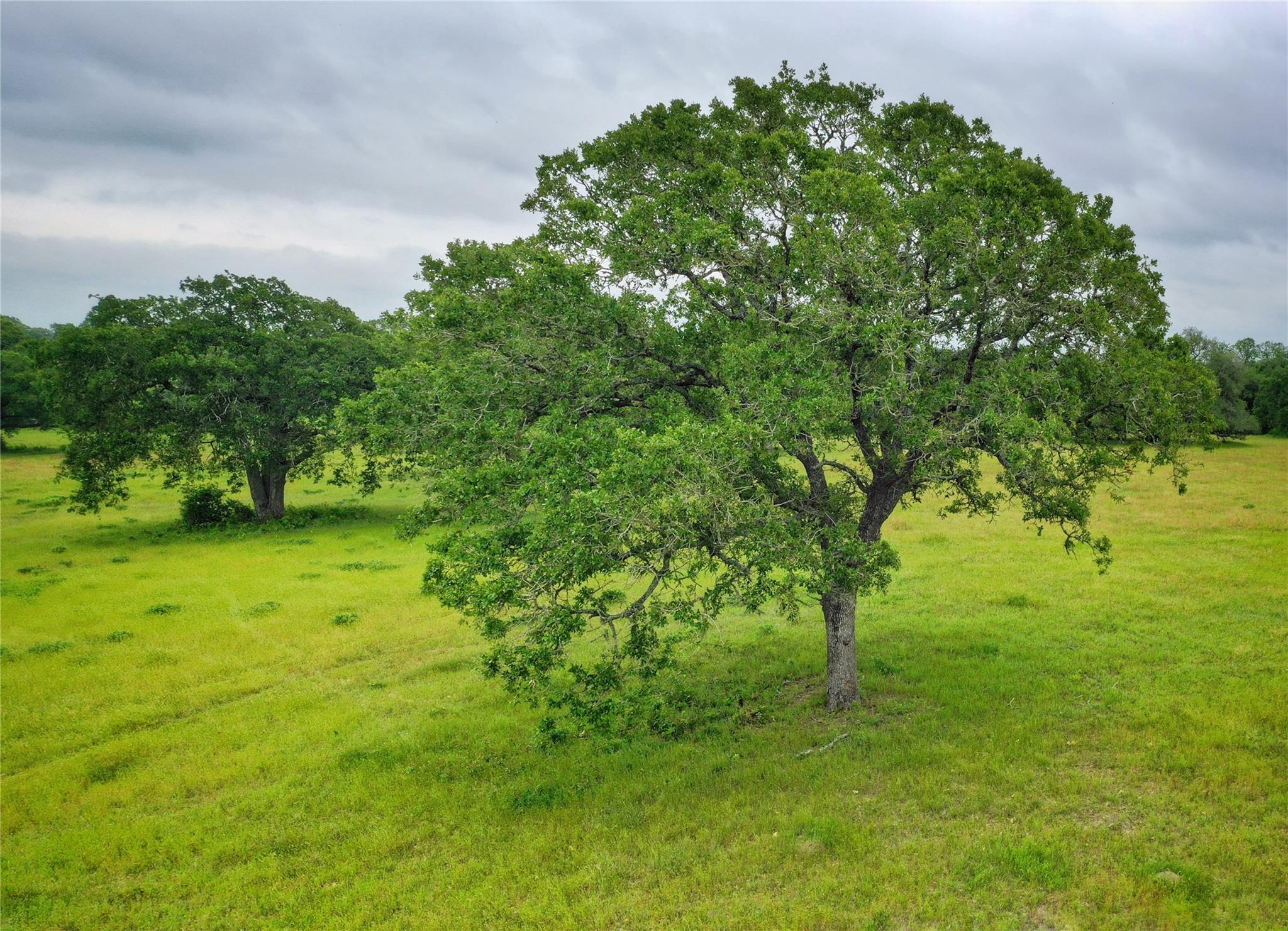 265 Boulton Creek Rd Property Photo - Muldoon, TX real estate listing