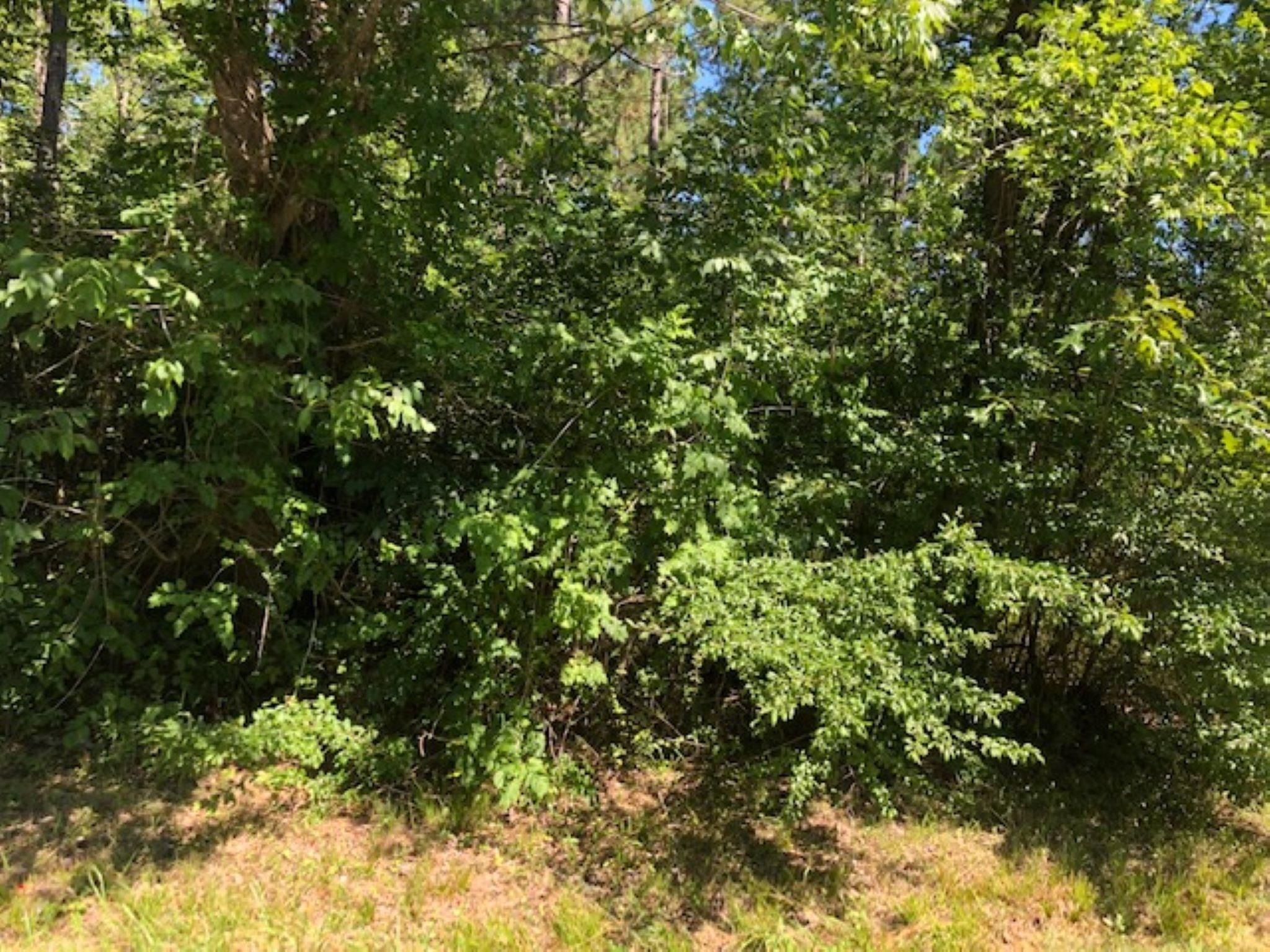 0 Fm 1375 Property Photo - New Waverly, TX real estate listing