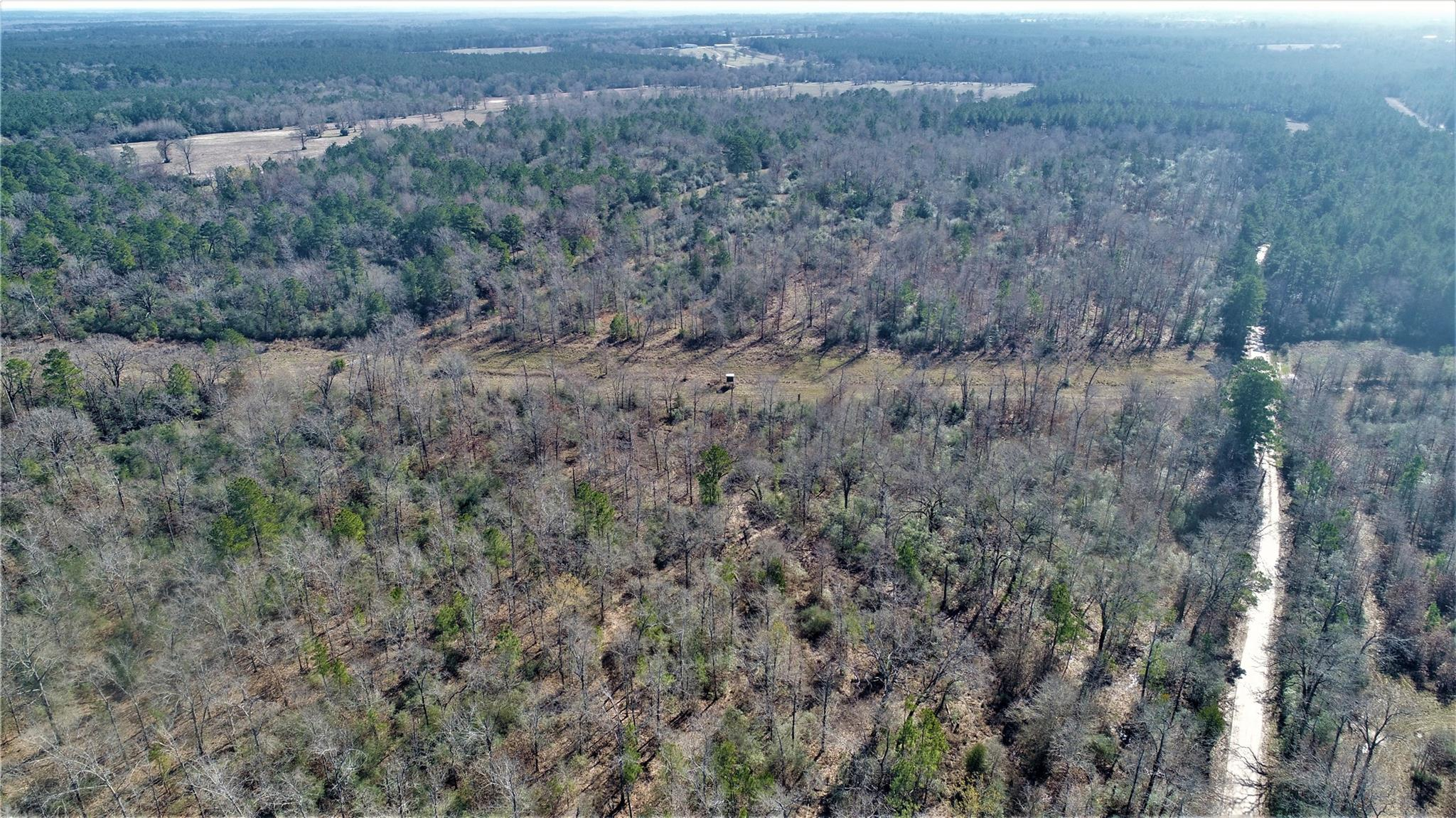 TBD CR 3420 Property Photo - Lovelady, TX real estate listing