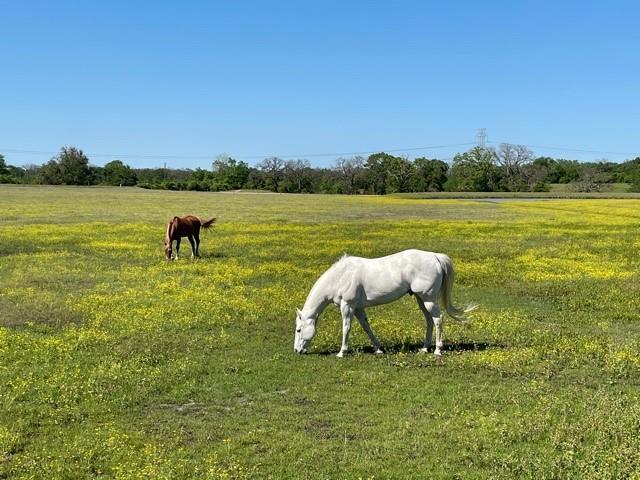 8172 N Fm 39 Property Photo - Jewett, TX real estate listing