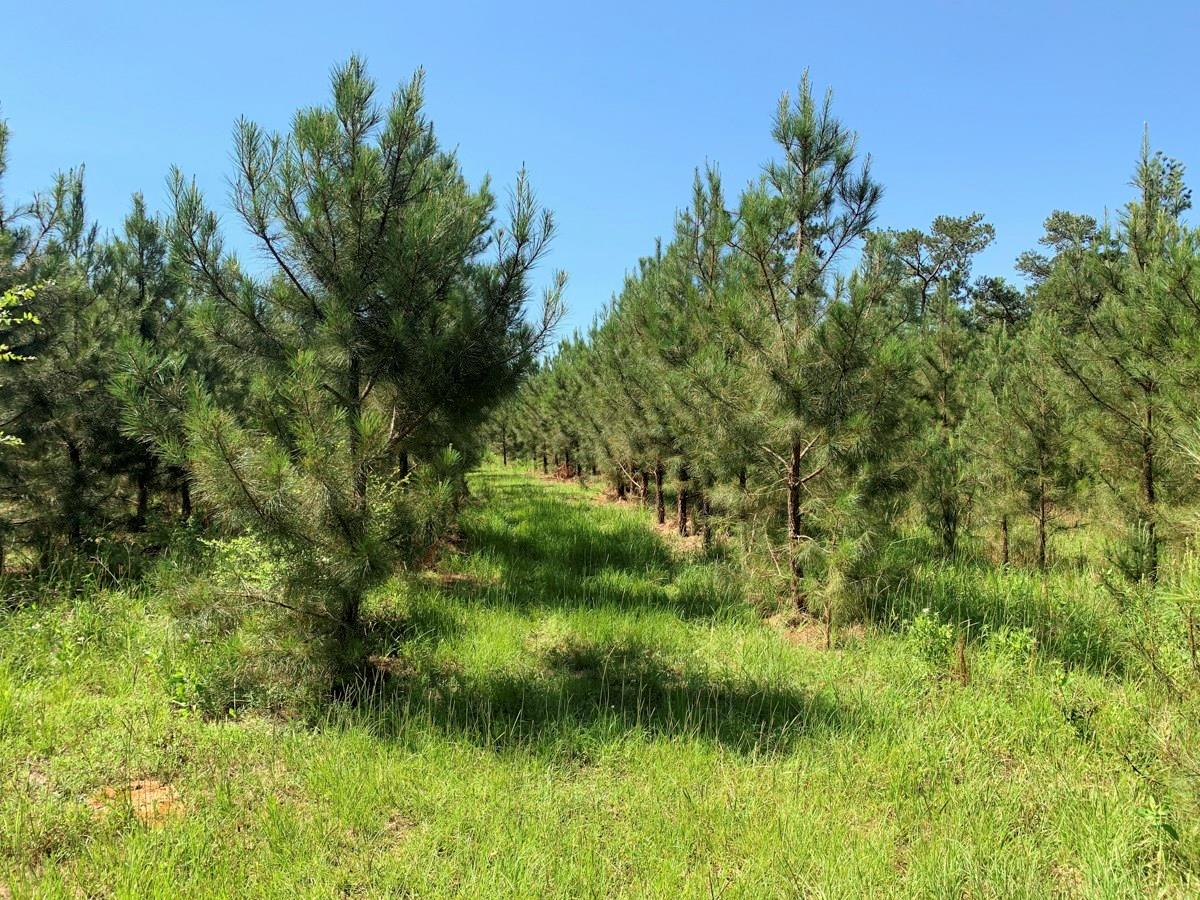 0 CR 391 Property Photo - Palestine, TX real estate listing