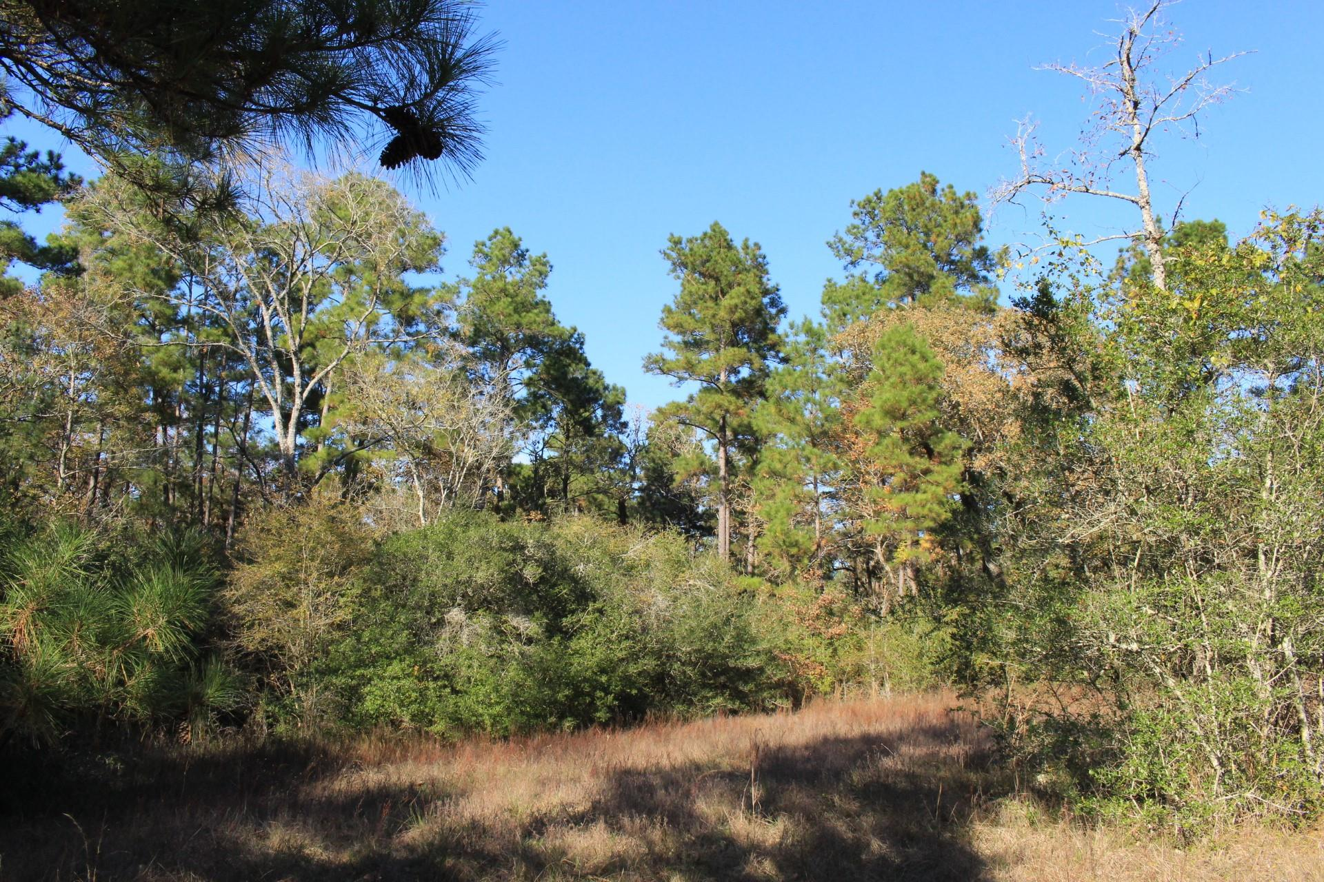 TBD Old Staley Road East Property Photo - Oakhurst, TX real estate listing