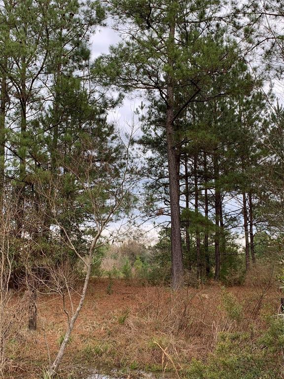 0 County Road 4460 Property Photo - Hillister, TX real estate listing