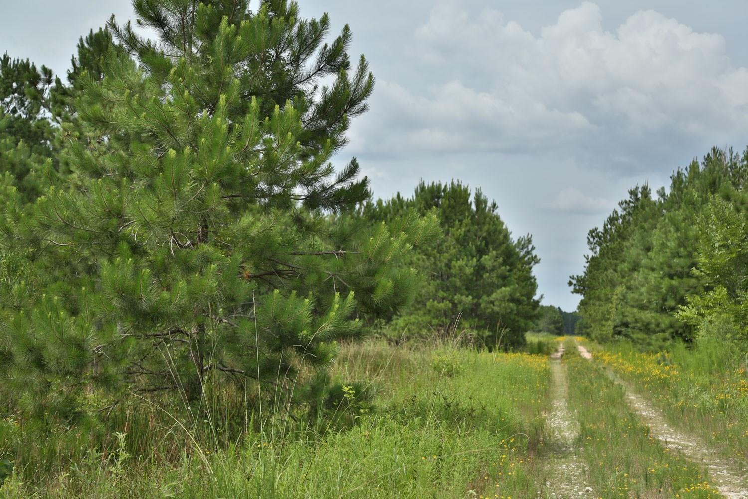 0 Hwy 105 Property Photo - Cleveland, TX real estate listing