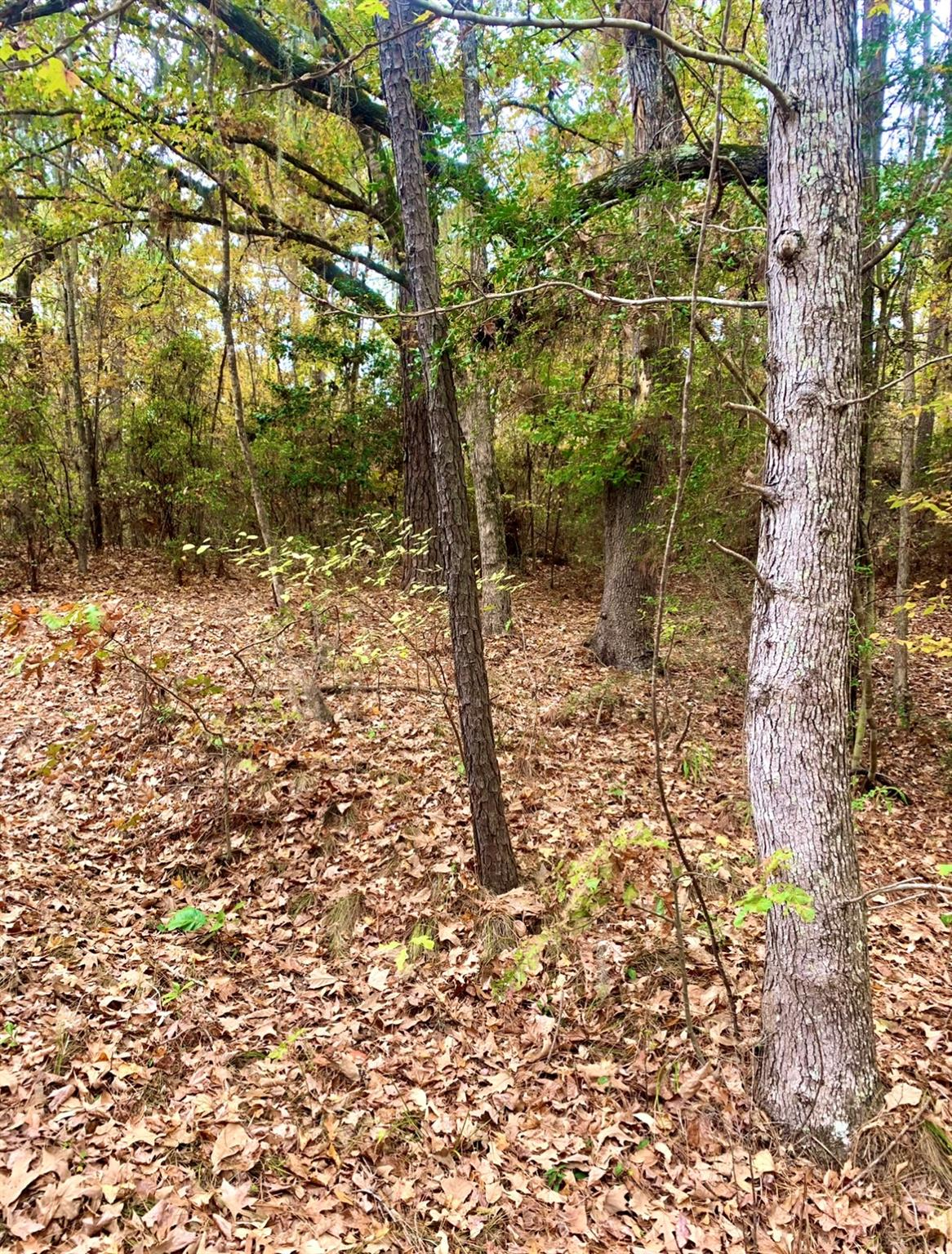 TBD Beech Dr Property Photo - Broaddus, TX real estate listing