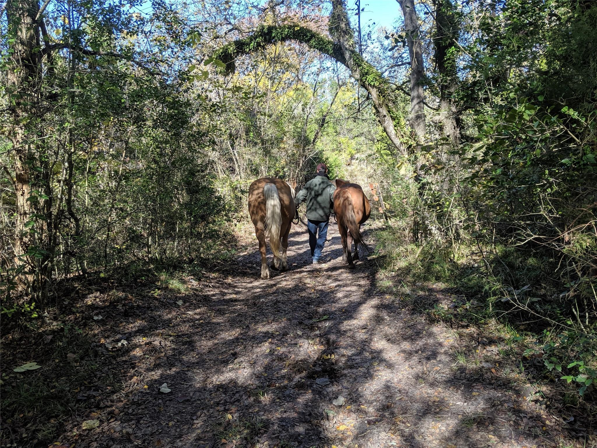 5267 Highway 90 N Property Photo - Anderson, TX real estate listing