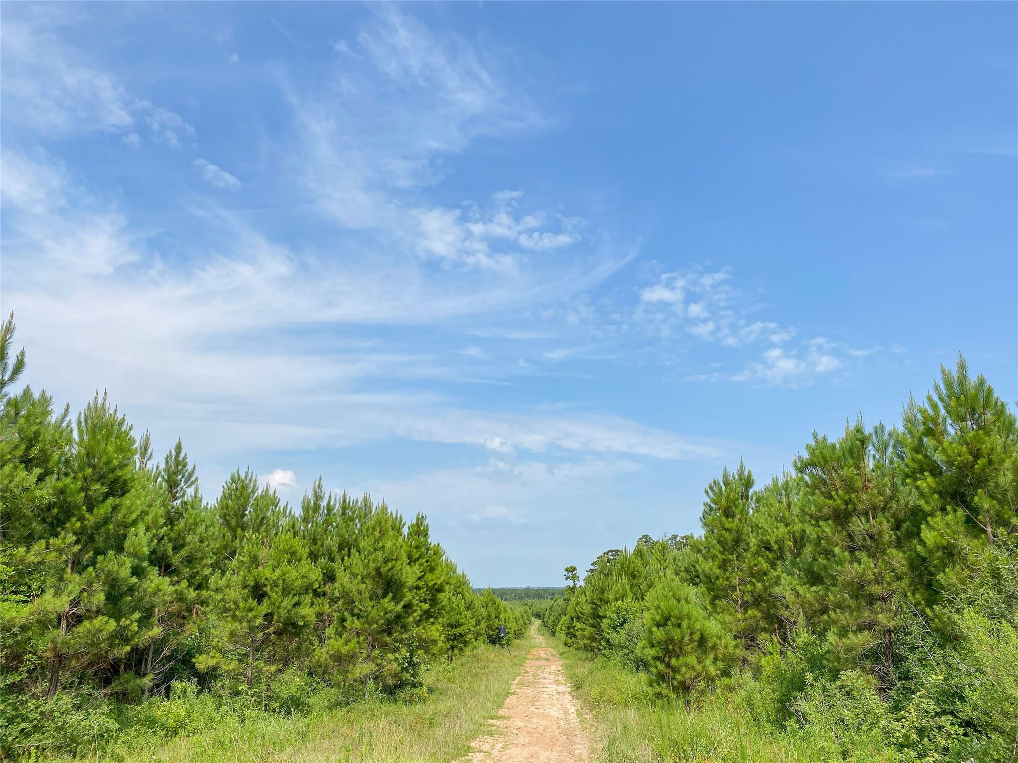 000 Red Hollow Rd Property Photo - Leggett, TX real estate listing