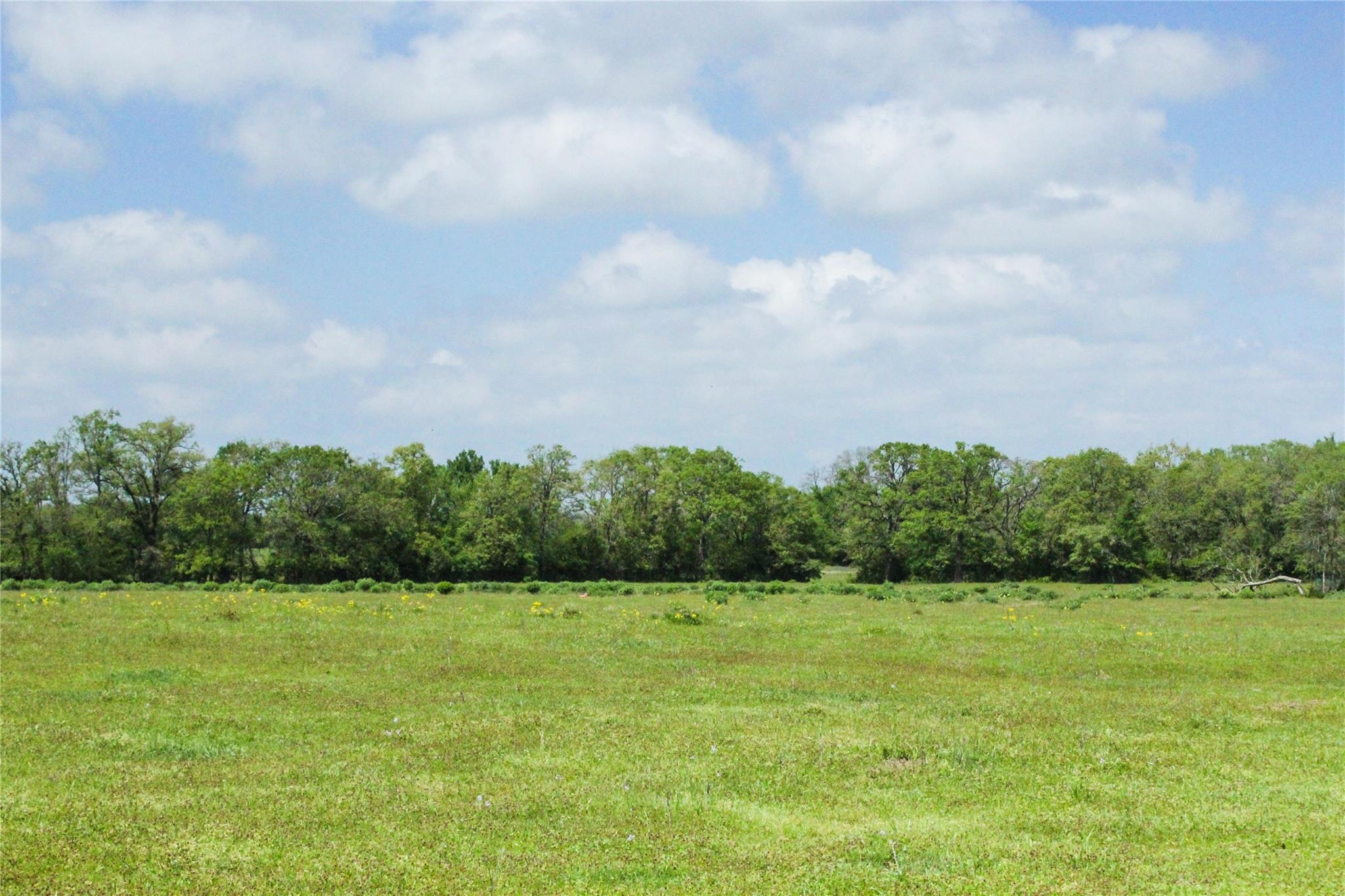 0054 County Road 229 Property Photo - Bedias, TX real estate listing