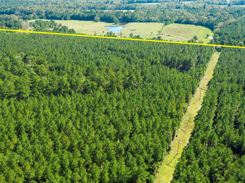 tbd County Rd 3200 Property Photo - Colmesneil, TX real estate listing