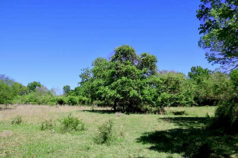 0014 CR 306 Property Photo - Navasota, TX real estate listing