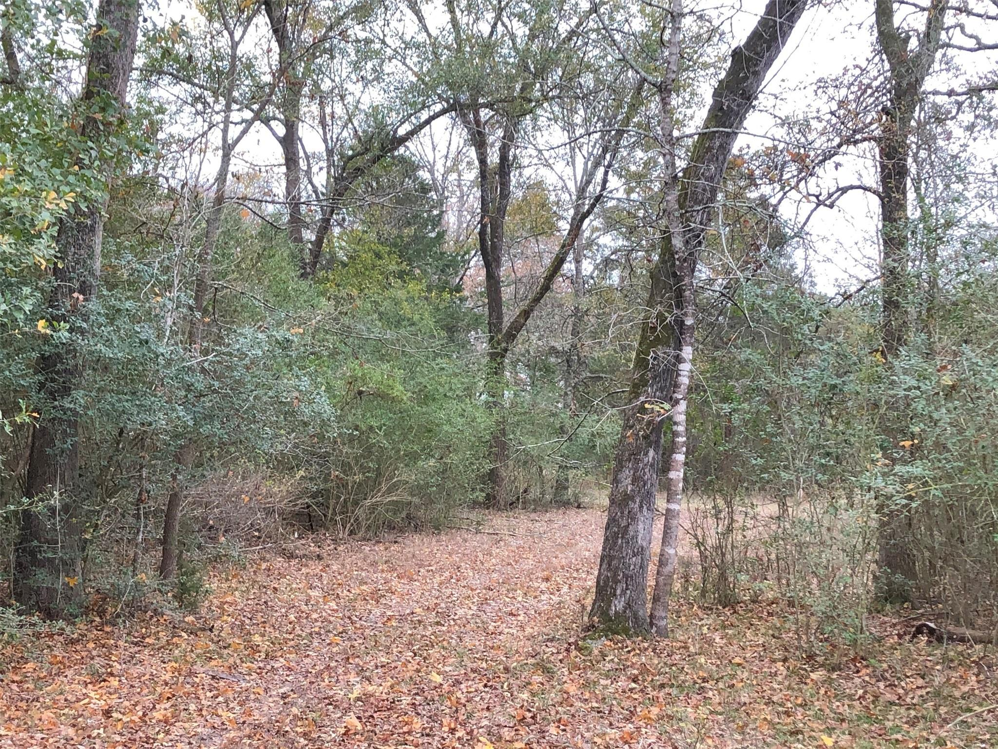 00 County Road 430 Property Photo - Dime Box, TX real estate listing