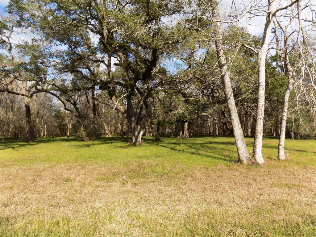 0 County Road 161 Shilo Loop Property Photo - Cedar Lane, TX real estate listing