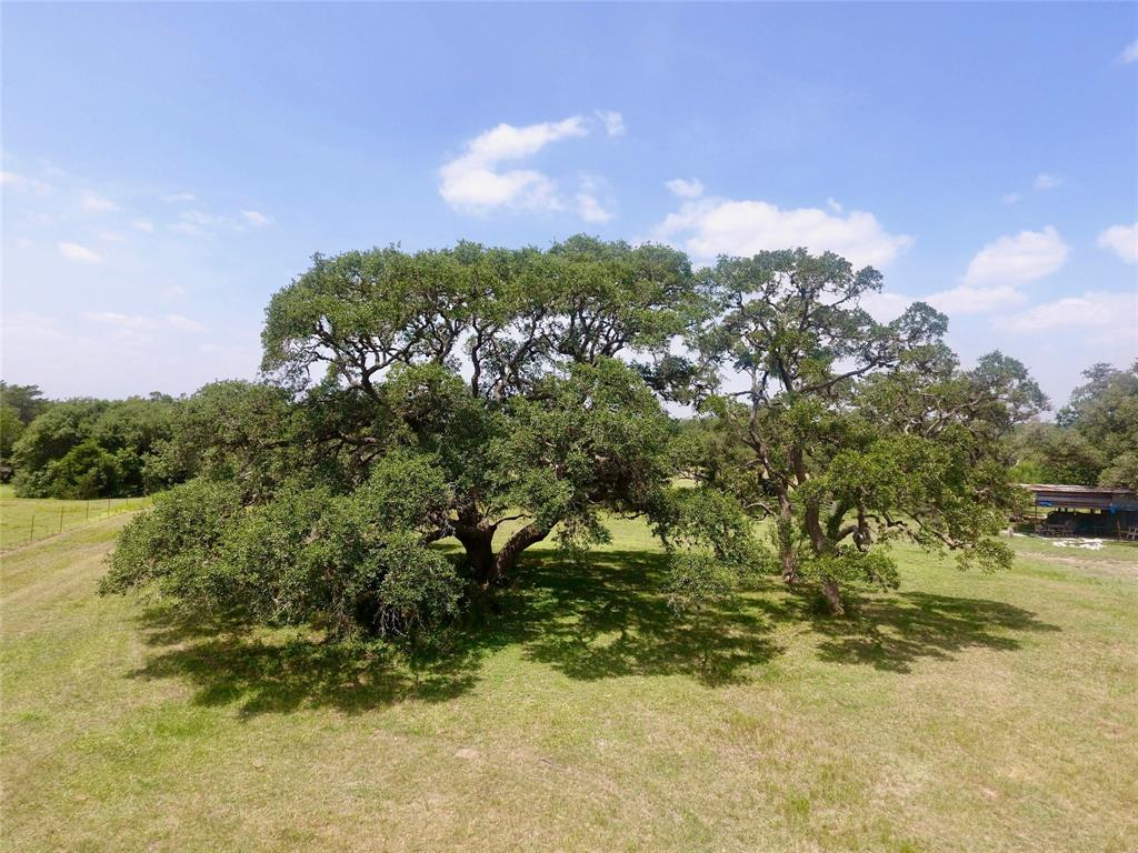 TBD County Road 387 Property Photo - Hallettsville, TX real estate listing