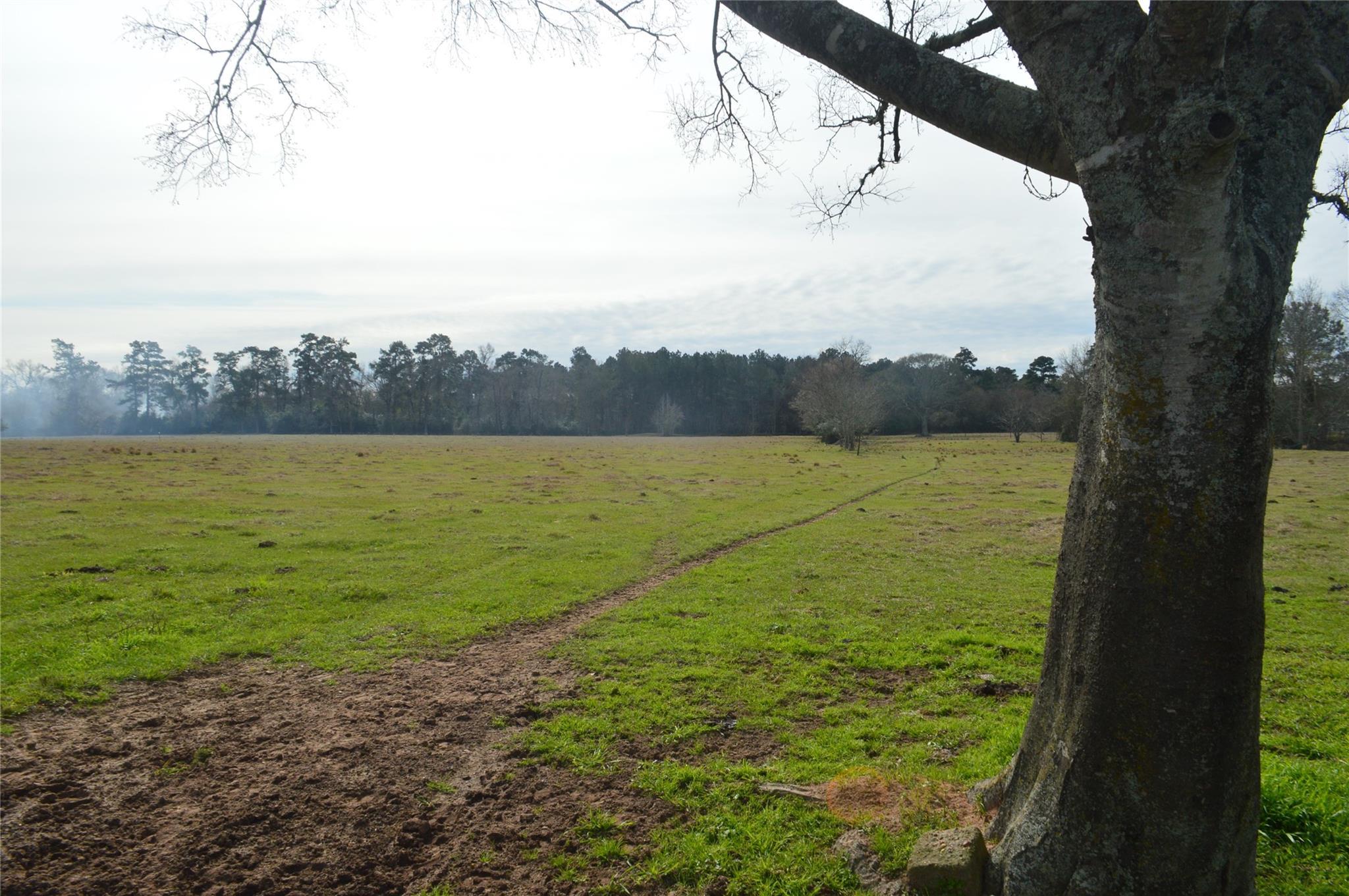 Tbd 001 Wiggins Property Photo