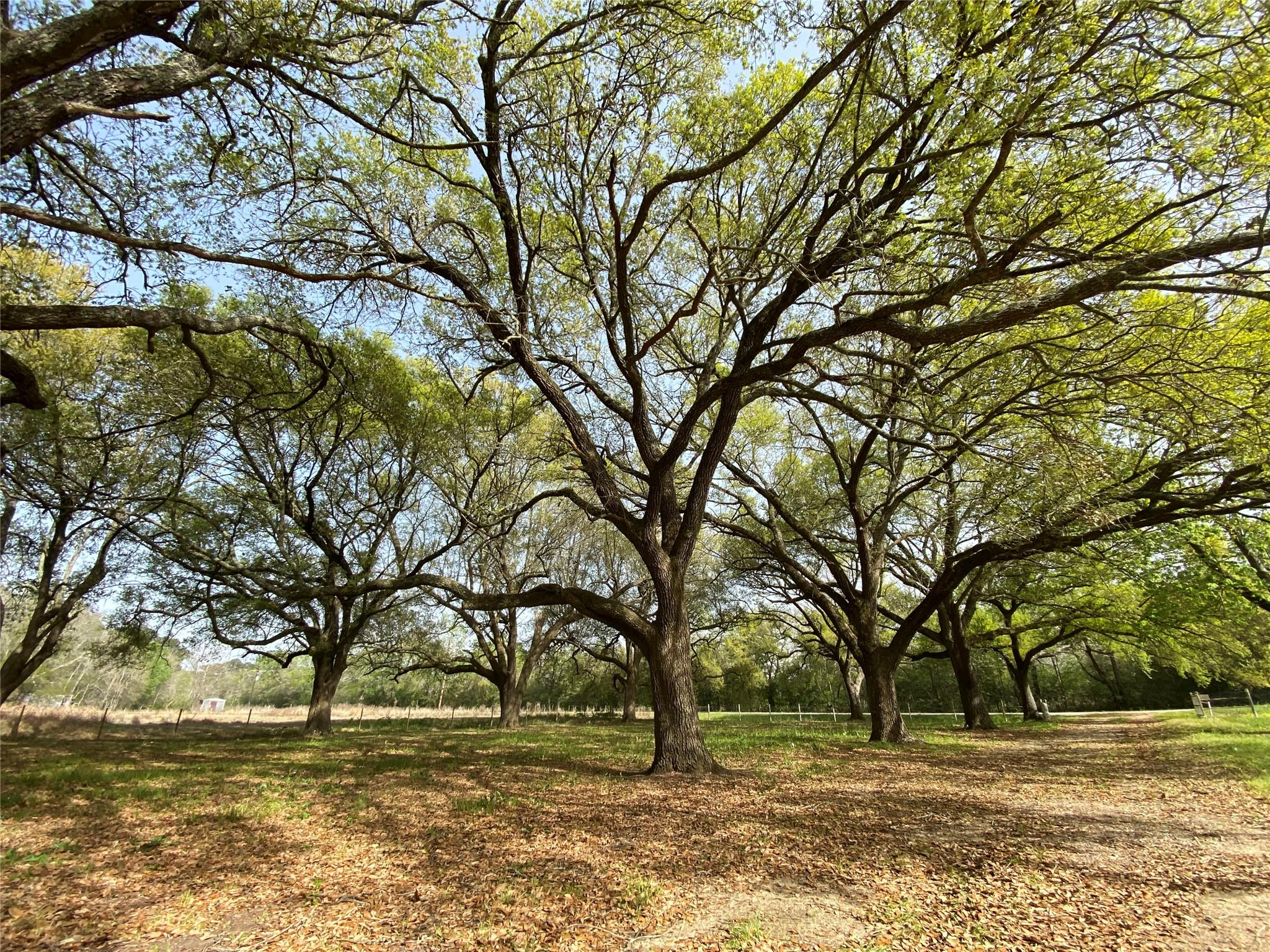 223 County Road 2048 Property Photo - Hull, TX real estate listing