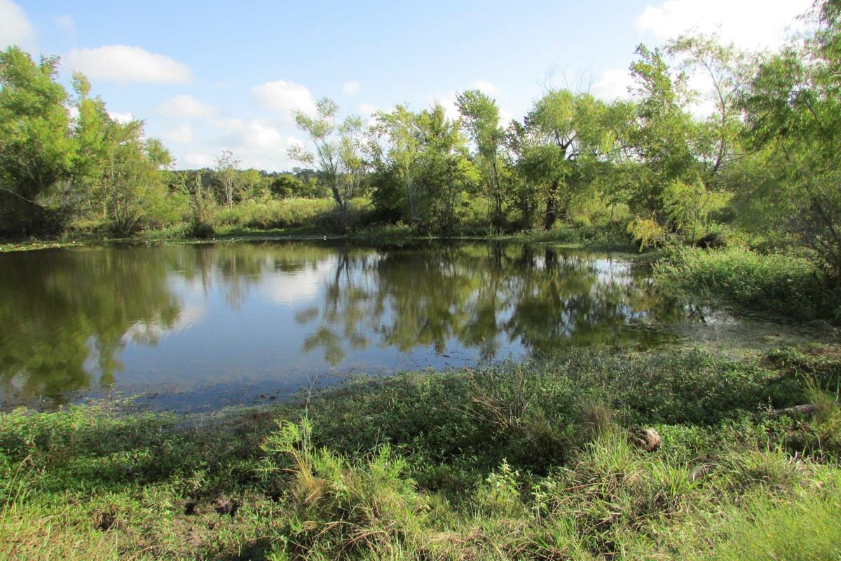 12018 CR 229 Property Photo - Bedias, TX real estate listing