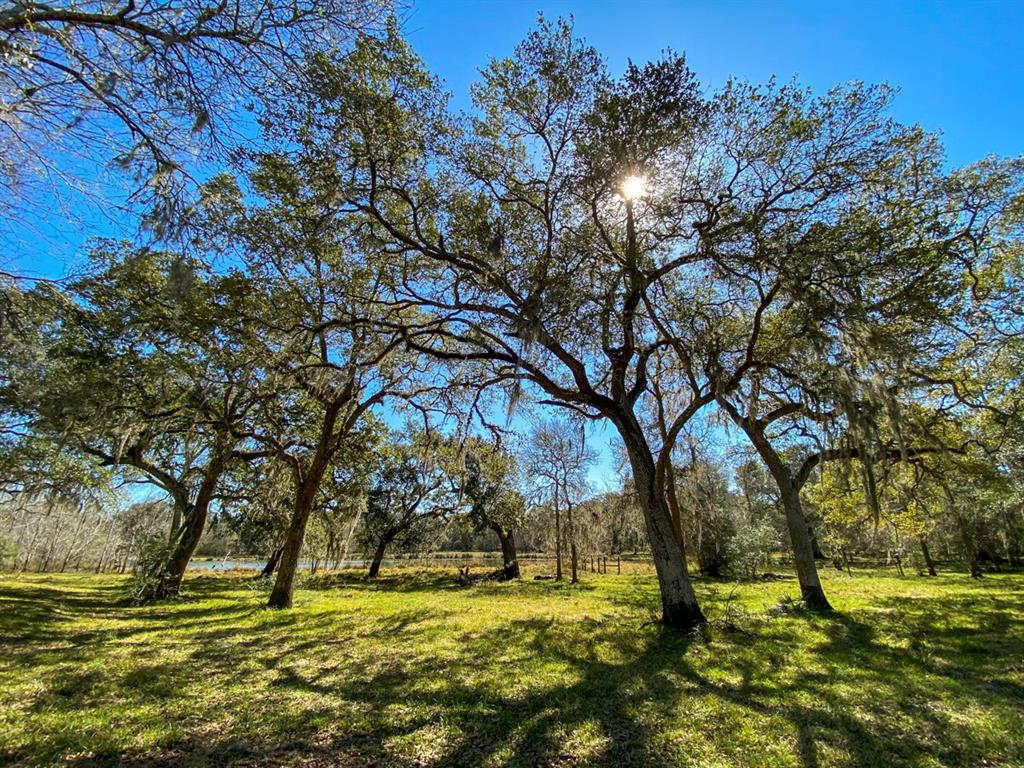 000 Forest Road, Damon, TX 77430 - Damon, TX real estate listing