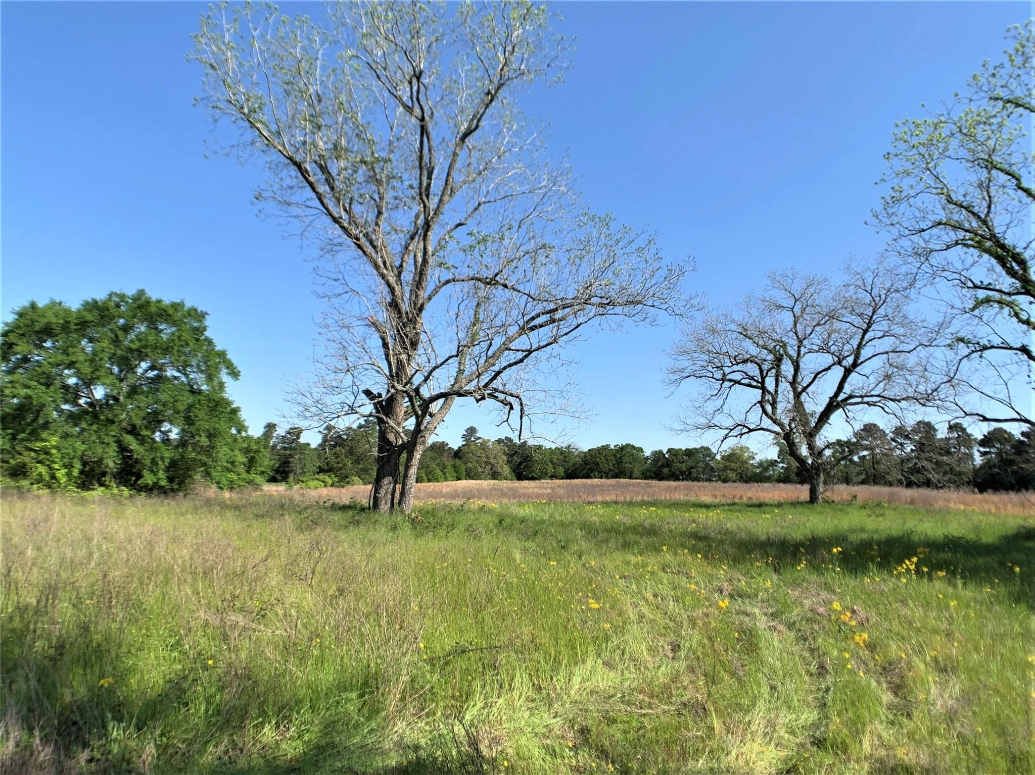 Tbd Farm To Market 2620 Property Photo
