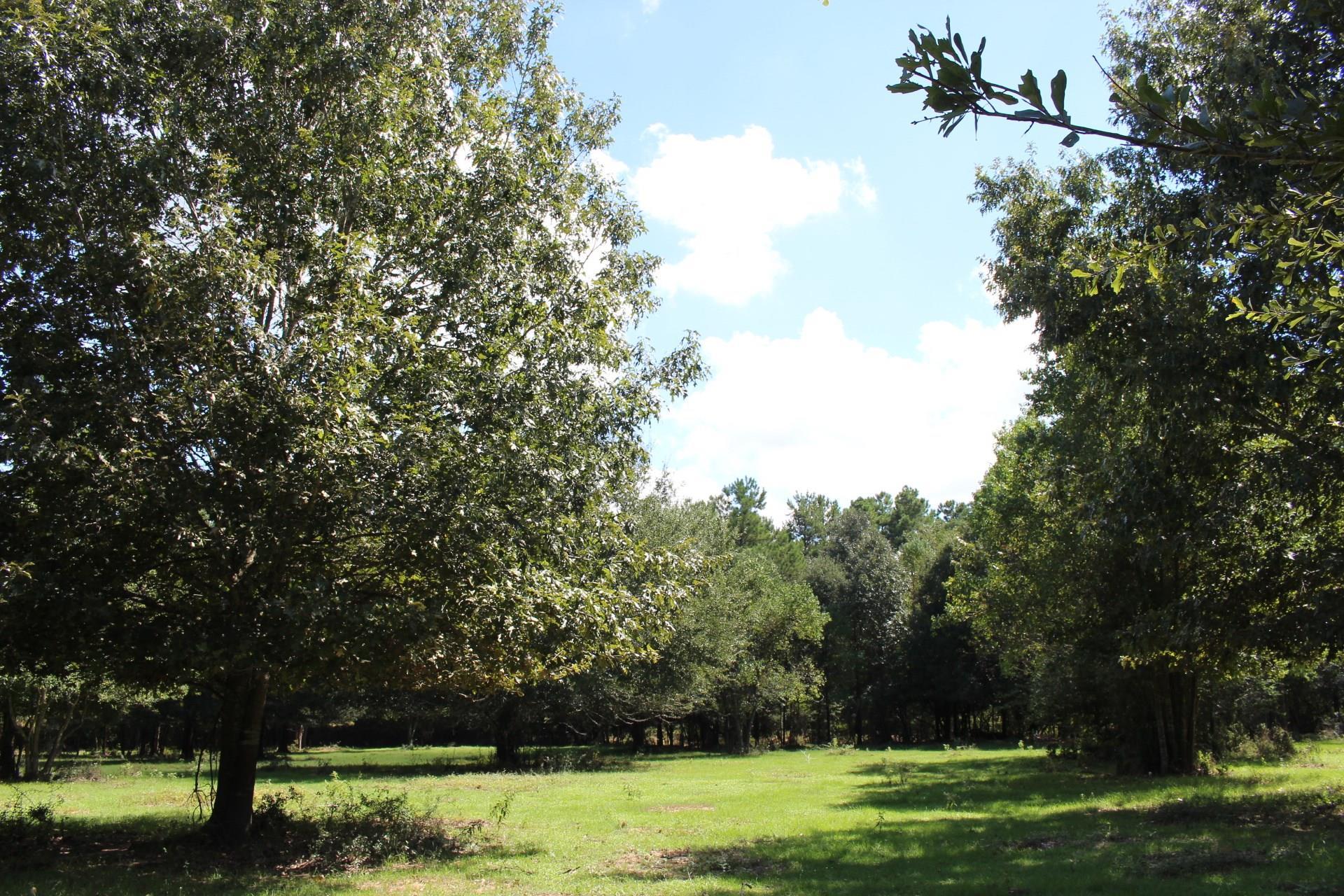 21369 Arnsworth Rd Property Photo - Montgomery, TX real estate listing