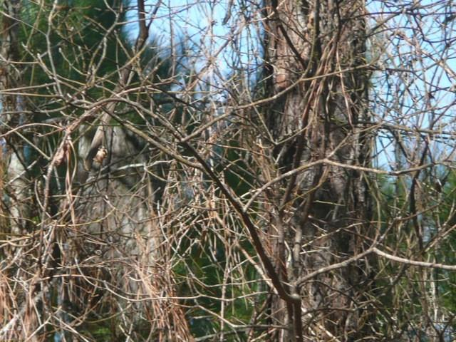 0,353 ACR,, Neches, TX 75779 - Neches, TX real estate listing
