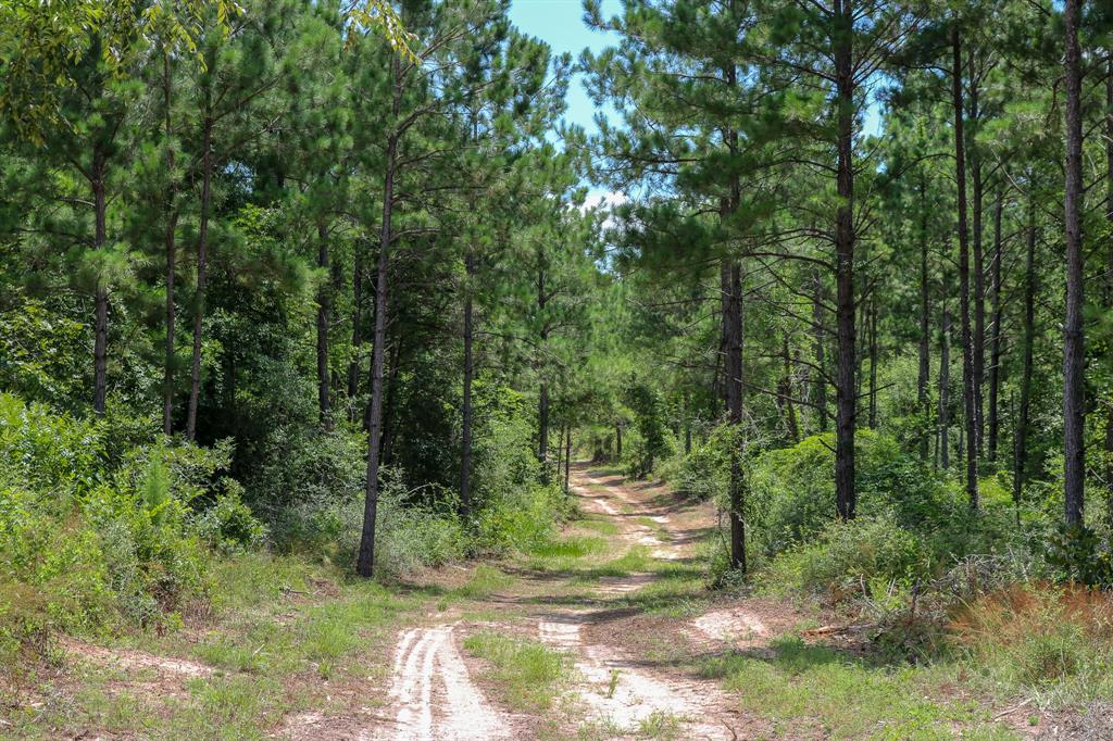 142 Acres Deer Run Road, Navasota, TX 77868 - Navasota, TX real estate listing