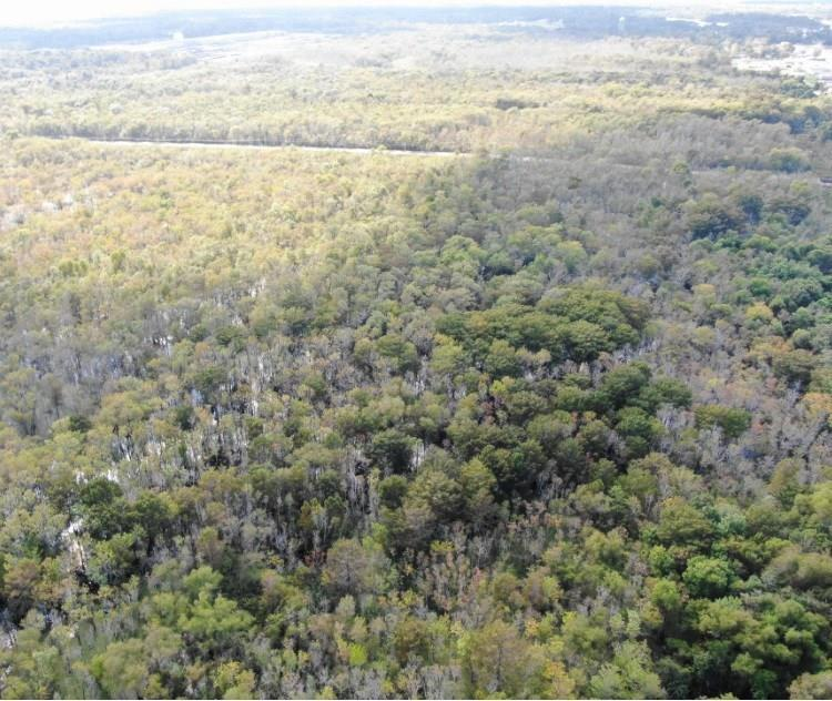 FM 2684 Fm 2684 East Off Hwy 90 Property Photo - Liberty, TX real estate listing