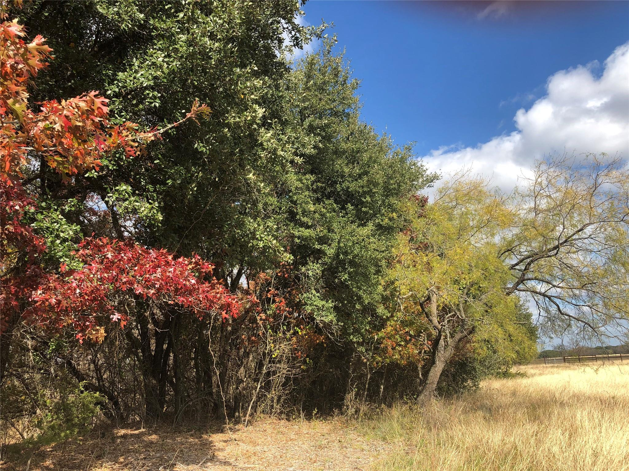 00 County Road 281 Tract 13 Property Photo - Hico, TX real estate listing