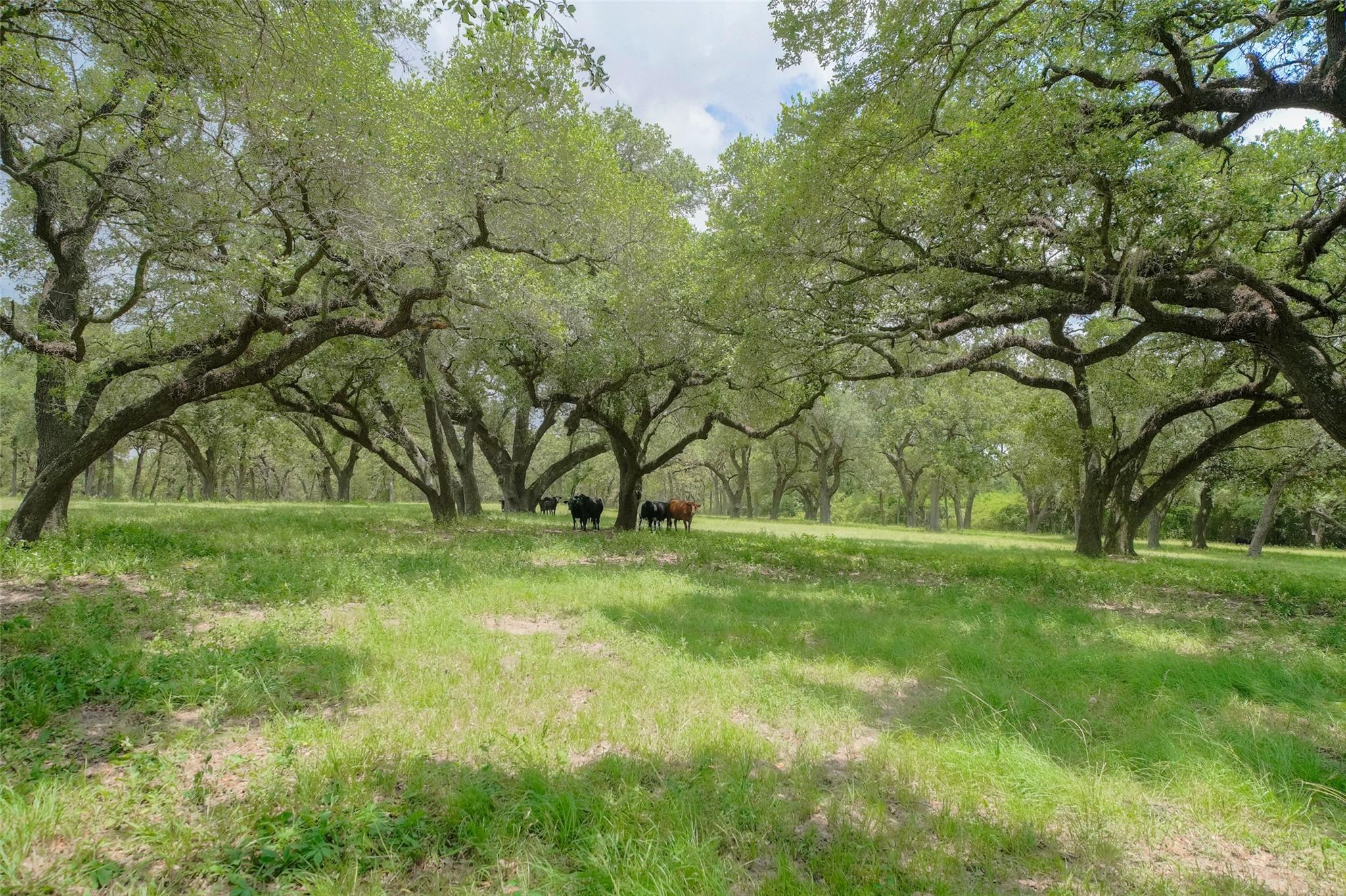 27930 Waller Spring Creek Road Property Photo - Hockley, TX real estate listing
