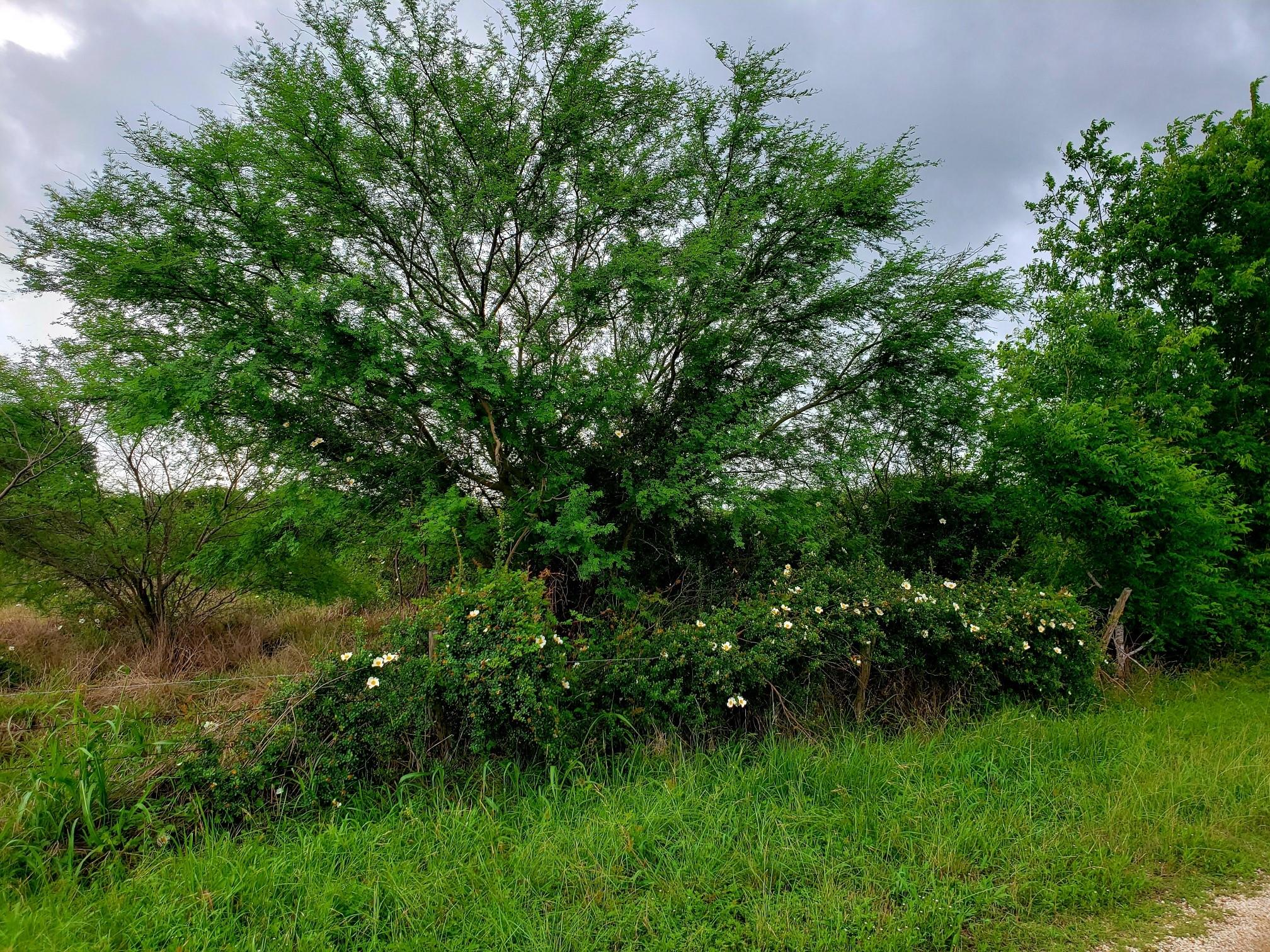 000 County Road 319 Property Photo