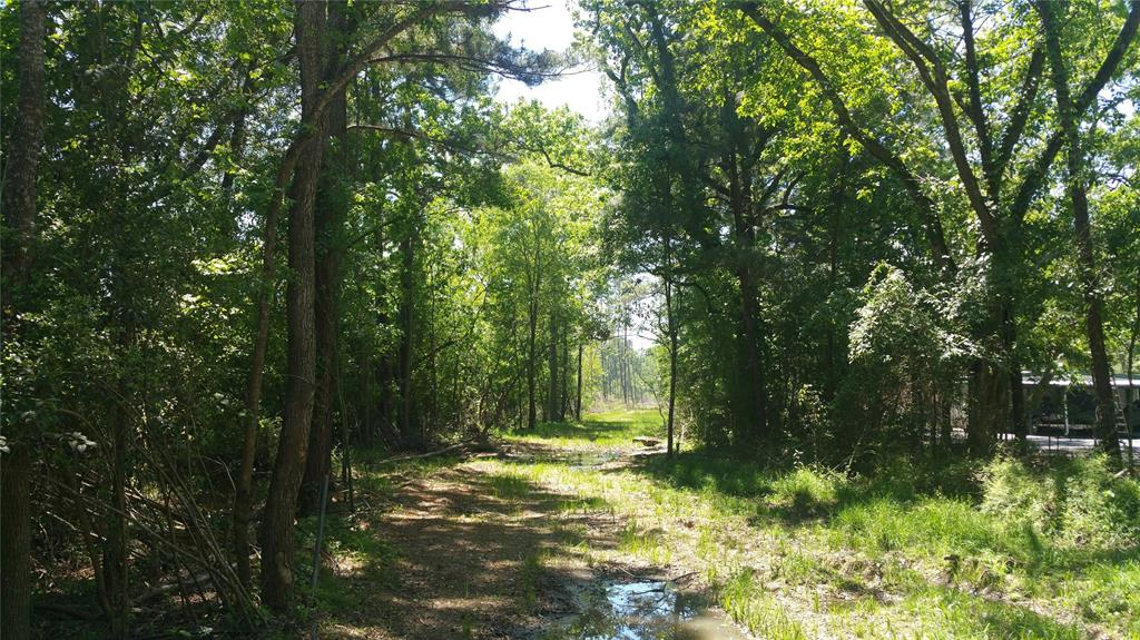 22542 Tree Monkey Road, New Caney, TX 77357 - New Caney, TX real estate listing