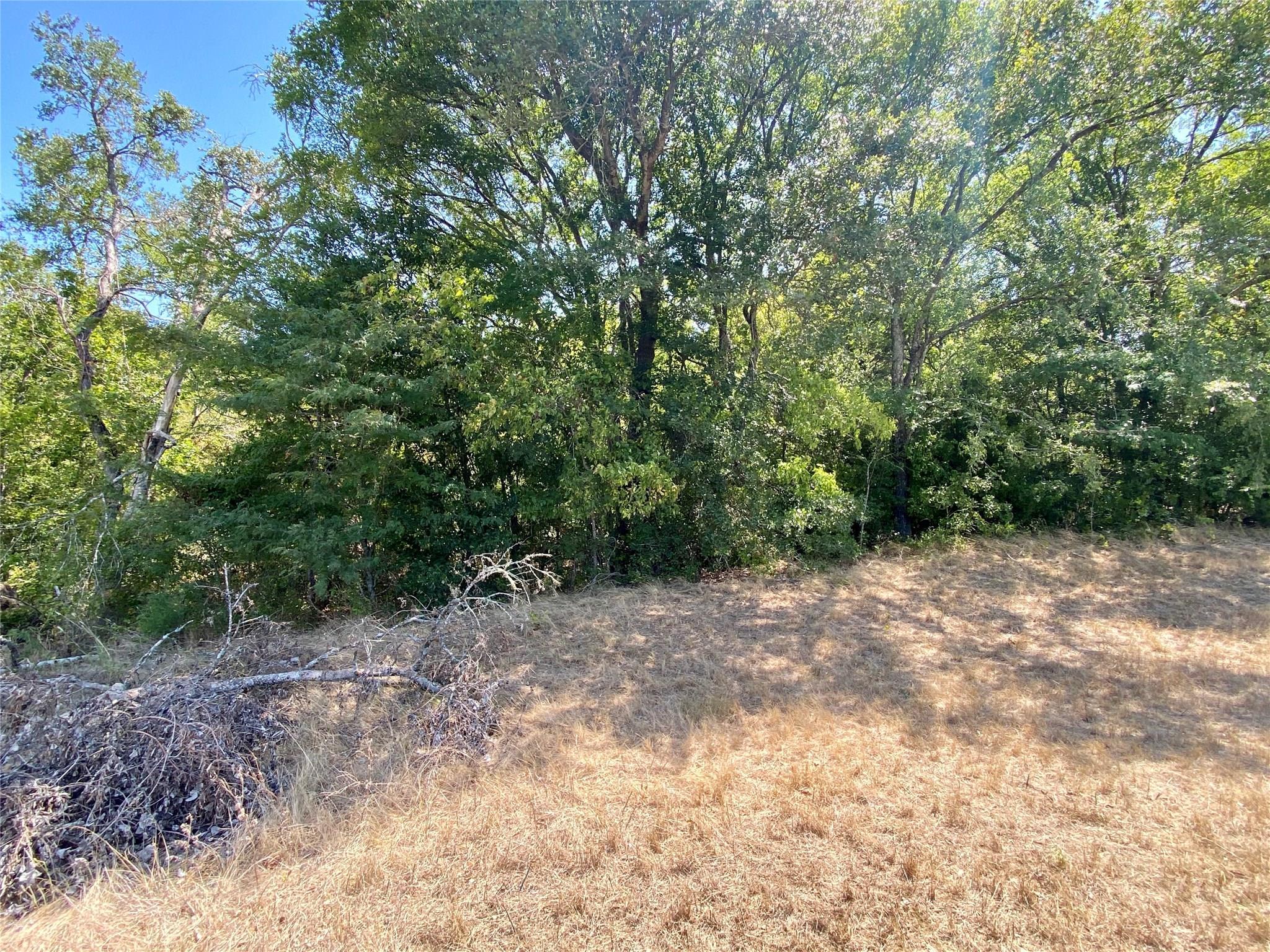 TBD FM 2159 Property Photo - Calvert, TX real estate listing