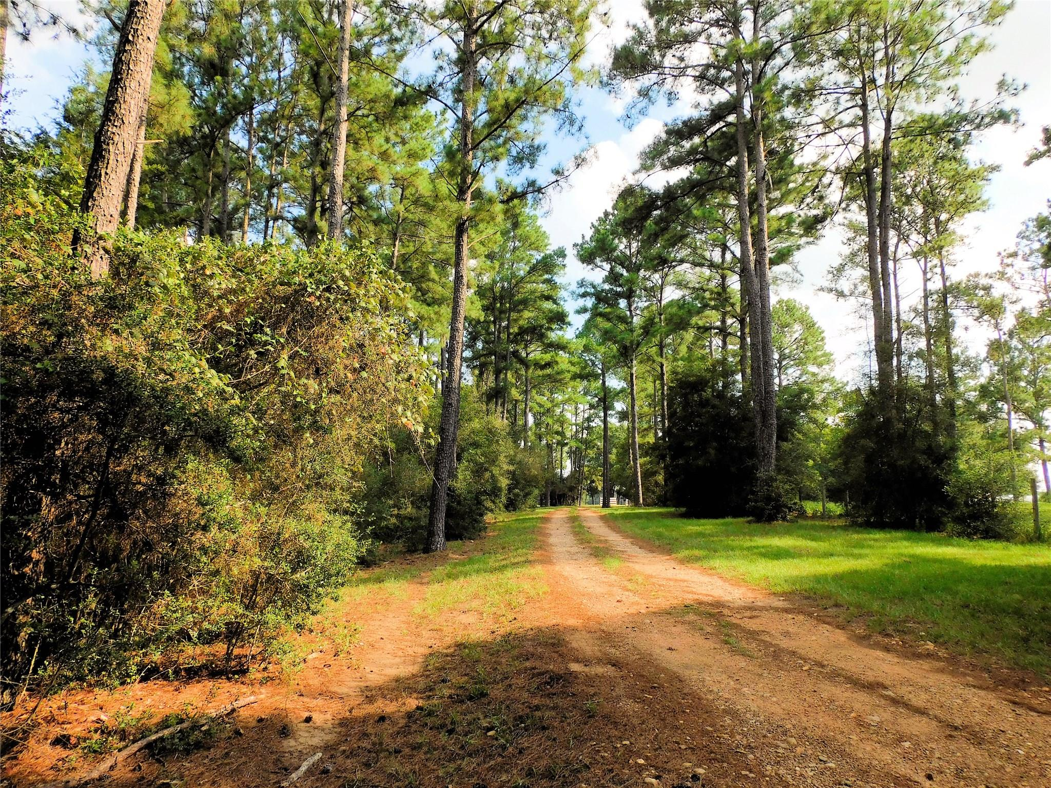 1667 Nelius Road Property Photo - Bellville, TX real estate listing