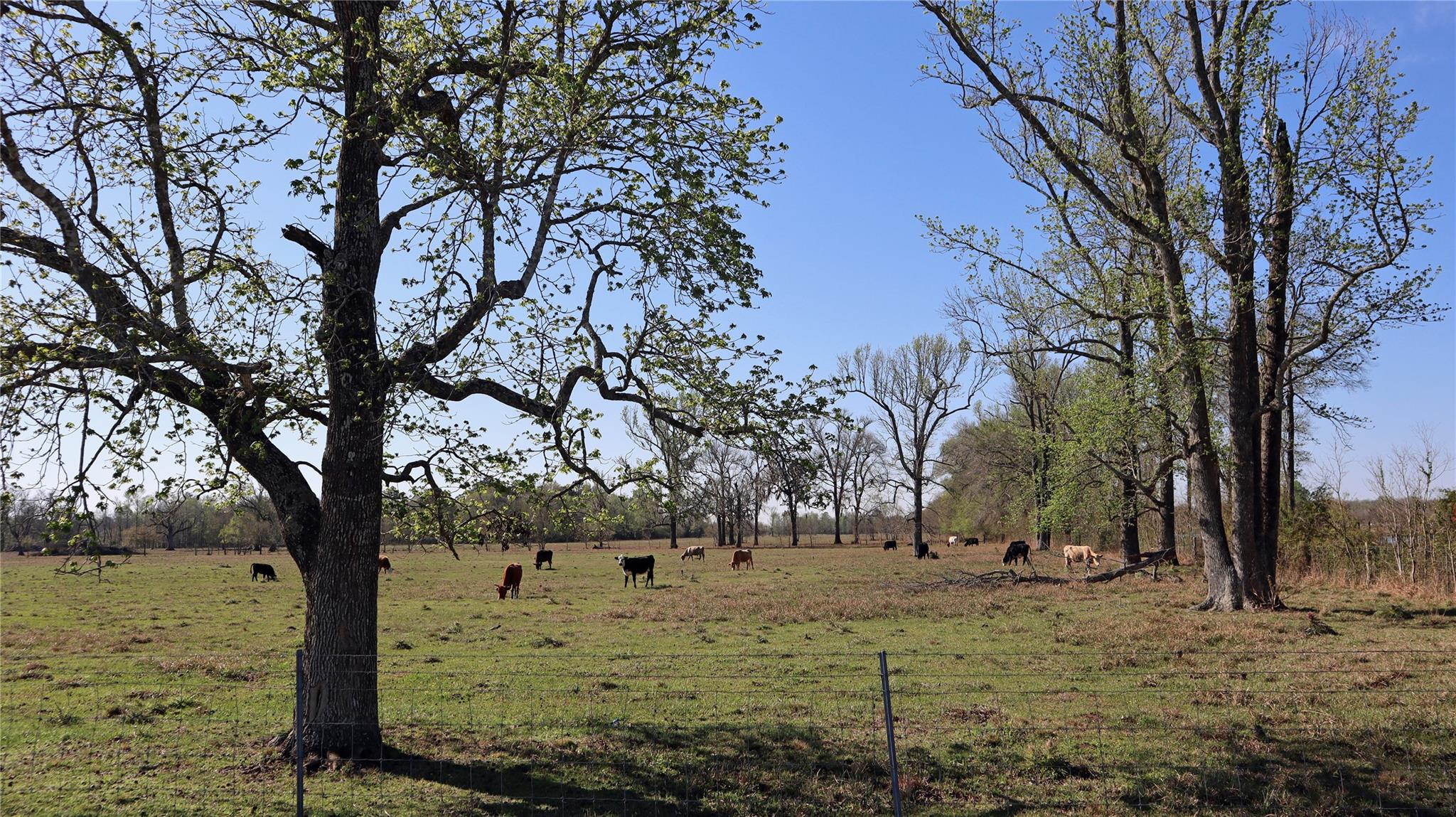 TBD County Road 2058 Property Photo - Liberty, TX real estate listing