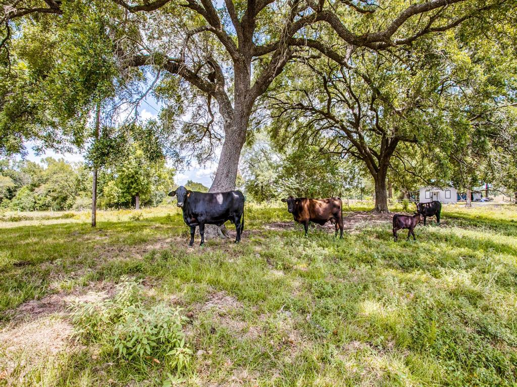 12060 N St Hwy 94, Apple Springs, TX 75926 - Apple Springs, TX real estate listing