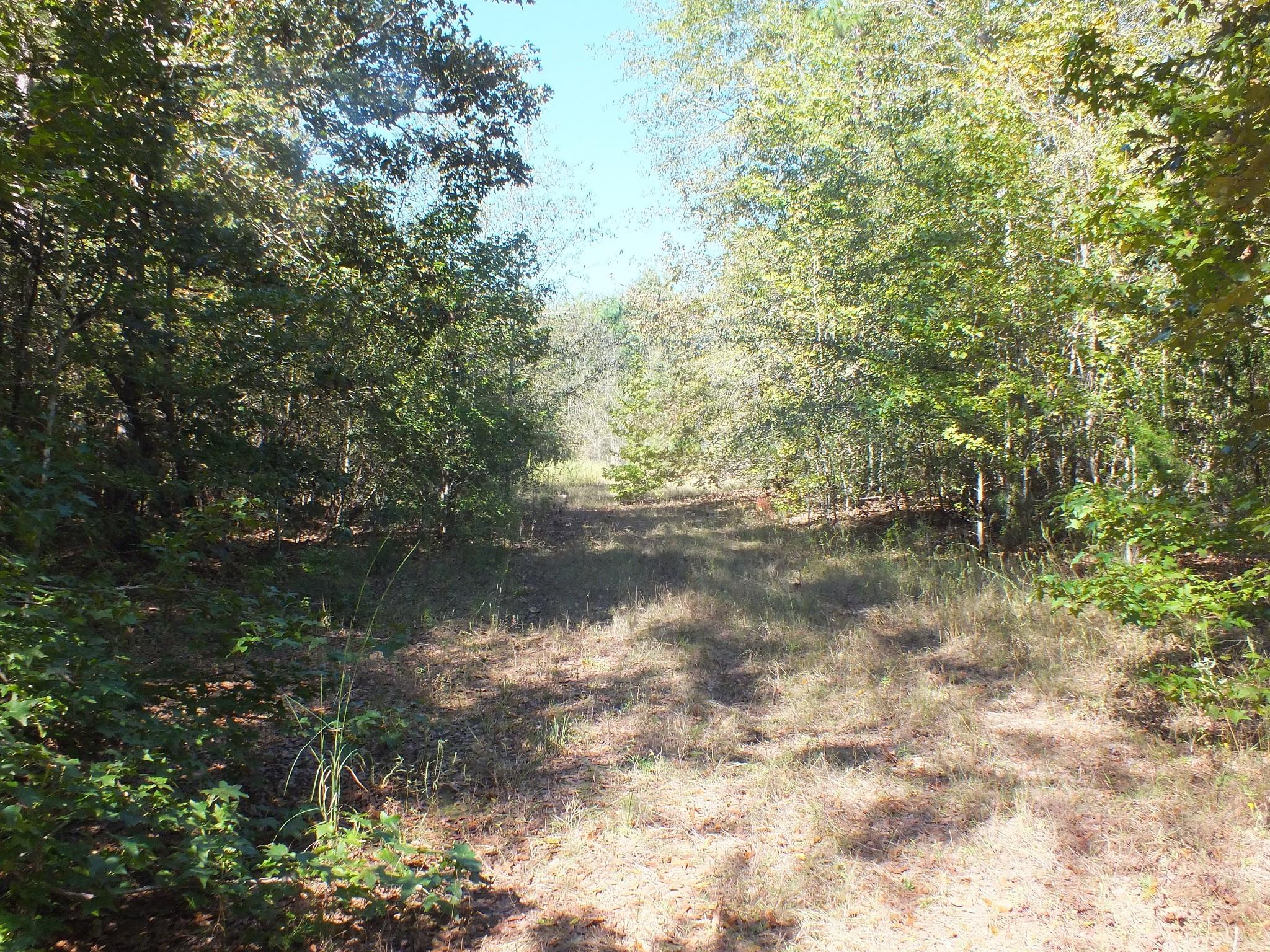 000 County Road 4227 Property Photo - New Summerfield, TX real estate listing