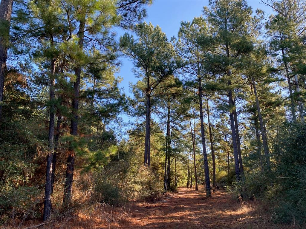 215 ac PR 1270 South Property Photo - Centerville, TX real estate listing