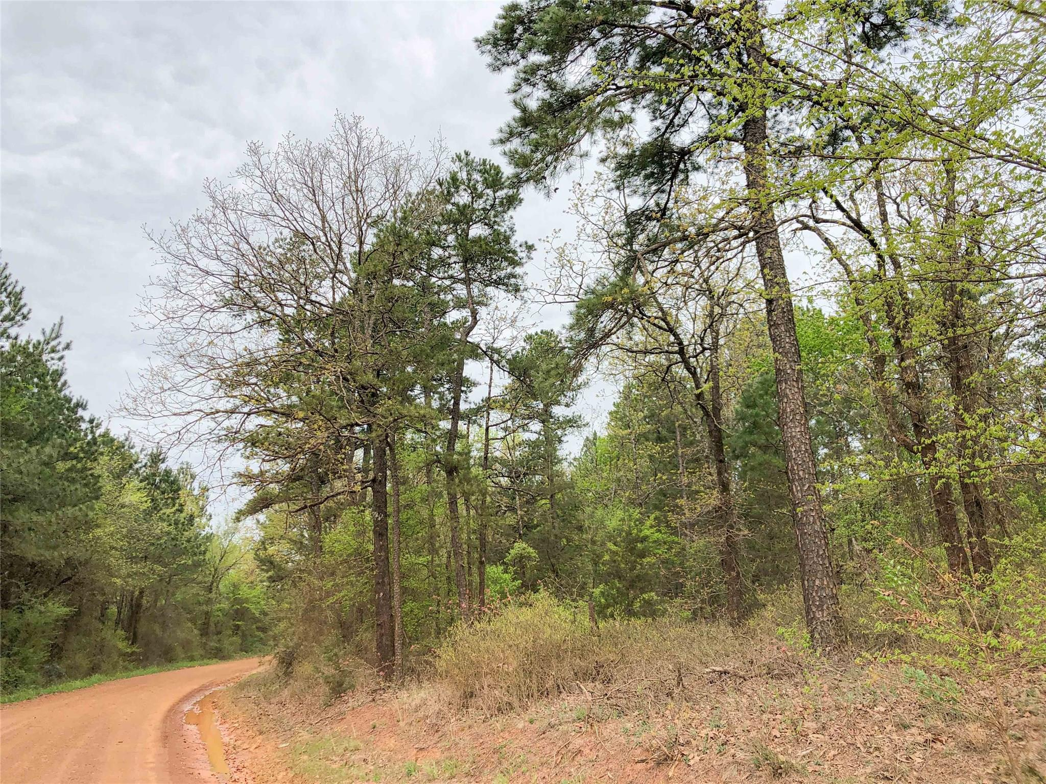 0000 CR 2864 Property Photo - Hughes Springs, TX real estate listing