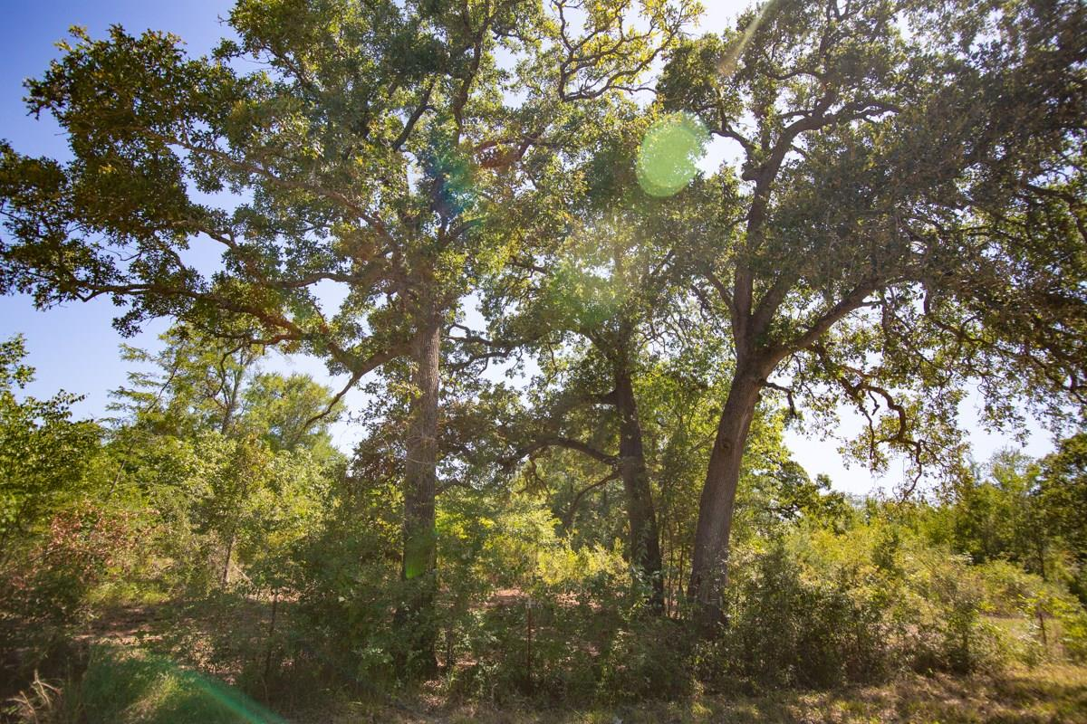 000 Morgan Spur Property Photo - Huntsville, TX real estate listing