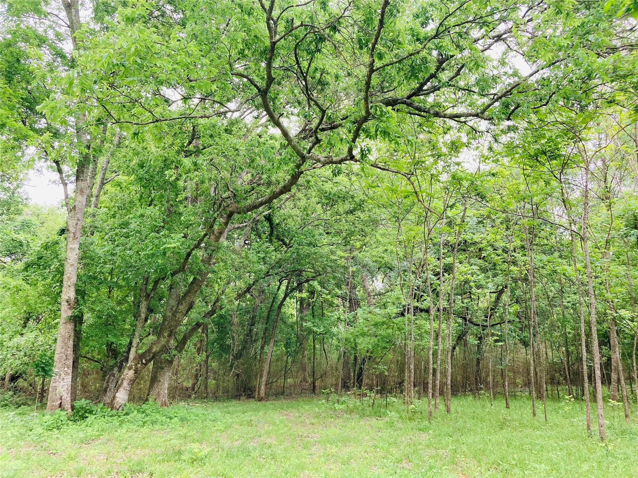 0 Amy Lane Property Photo - Boling, TX real estate listing