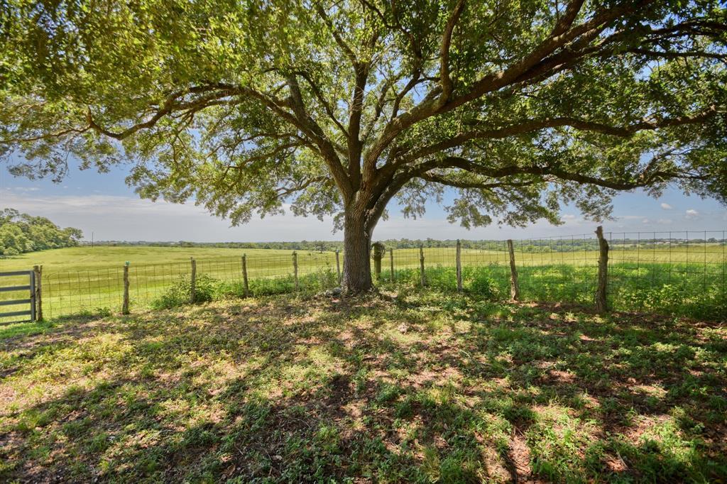 1955 Wiesepape Road, Brenham, TX 77833 - Brenham, TX real estate listing