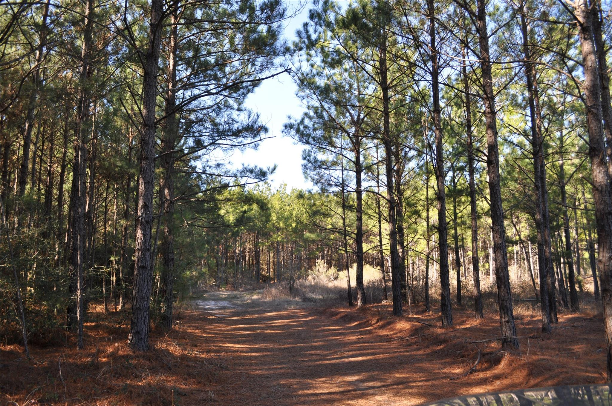 00 Hopewell Road Property Photo - Bedias, TX real estate listing
