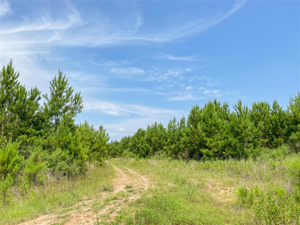 00000 Red Hollow Rd Property Photo - Leggett, TX real estate listing
