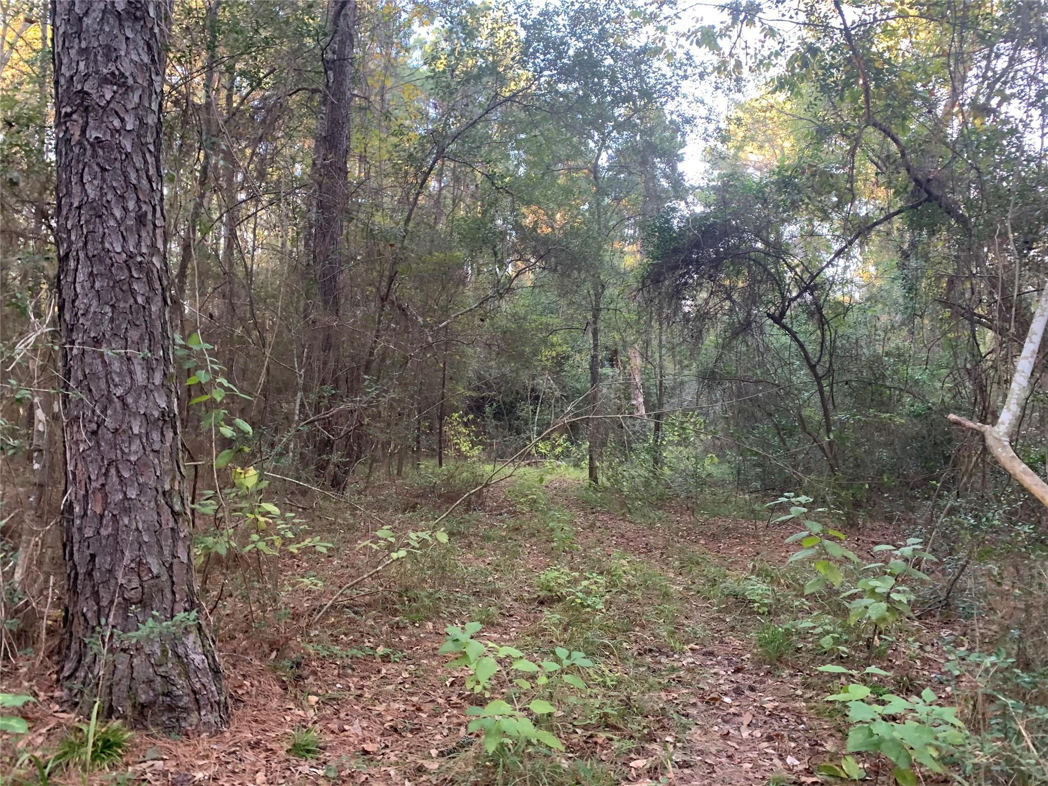 24424 Nichols Sawmill Rd Property Photo