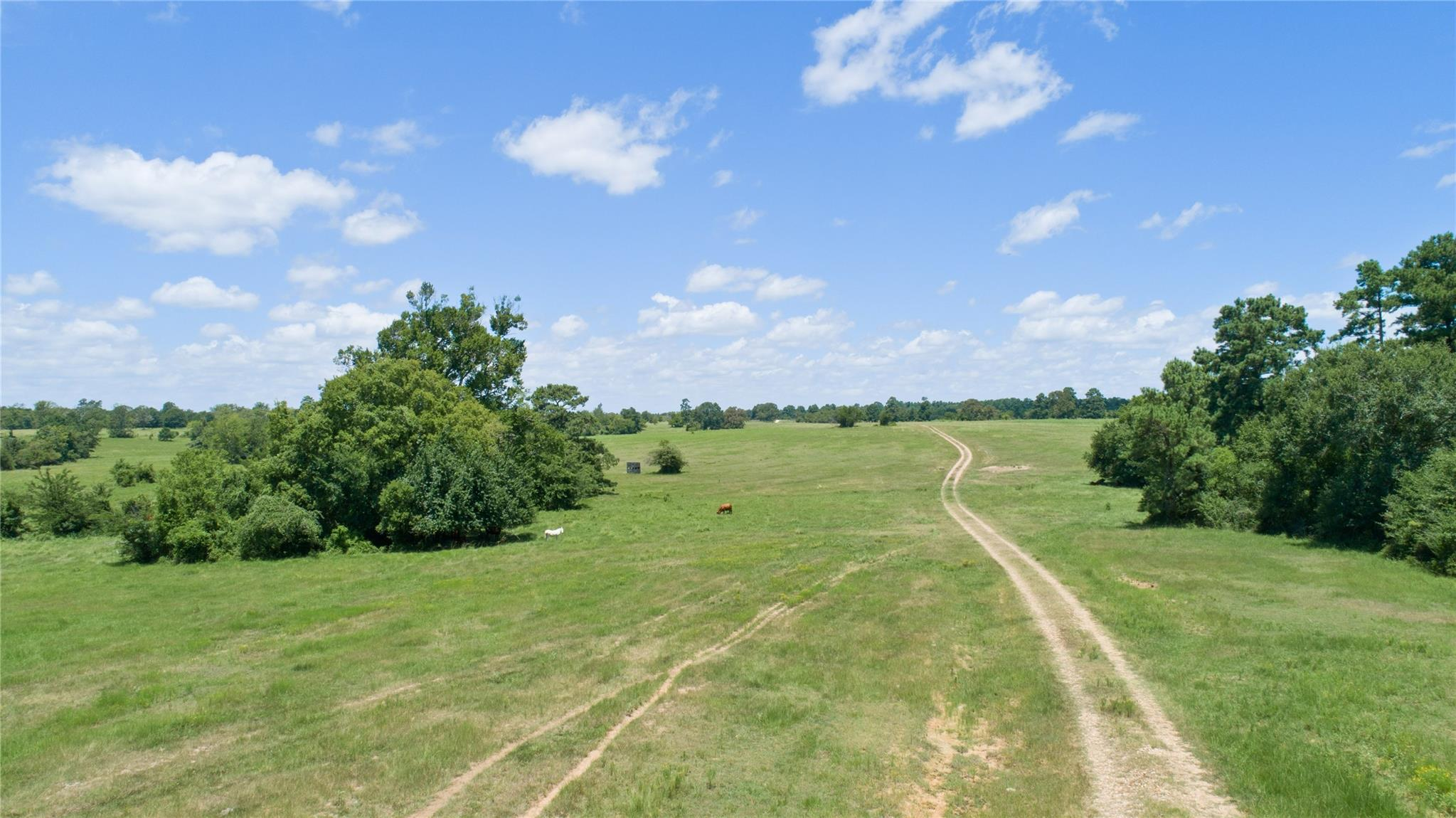 0000 County Road 208 Property Photo - Navasota, TX real estate listing
