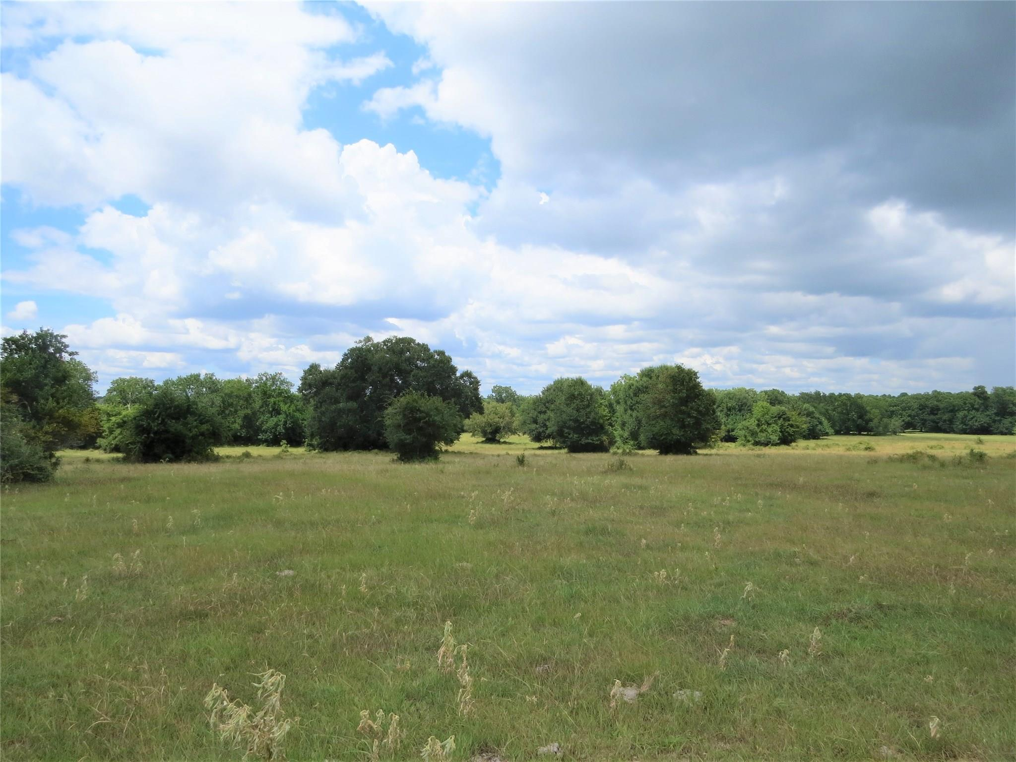 123.557 Acres FM 1774 Property Photo - Anderson, TX real estate listing