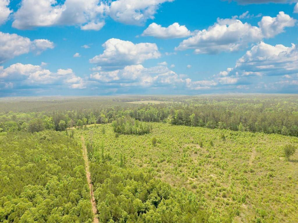 000,County Road 2125,, Burkeville, TX 75932 - Burkeville, TX real estate listing