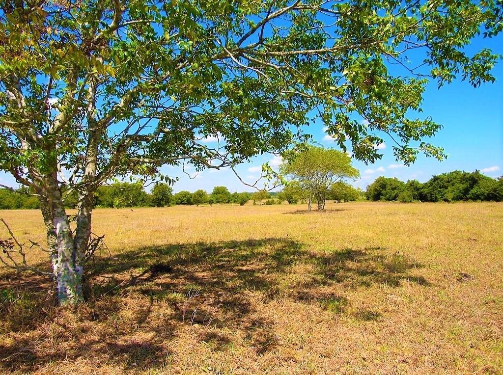 Tract 2 Nixon Lake Road Property Photo
