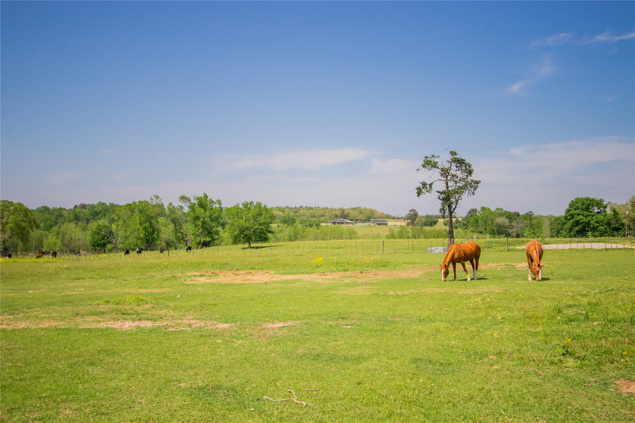 1830 County Road 278 Property Photo - Buffalo, TX real estate listing