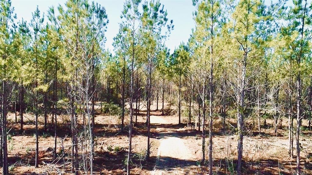 TBD FM 358, Apple Springs, TX 75926 - Apple Springs, TX real estate listing